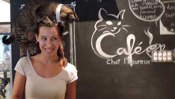 Montreal's Cat Café