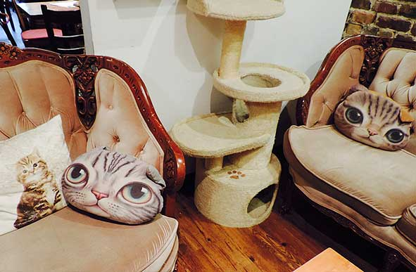 Cat décor at Montreal's Café Chat L'Heureux. Photo by Miriam Porter