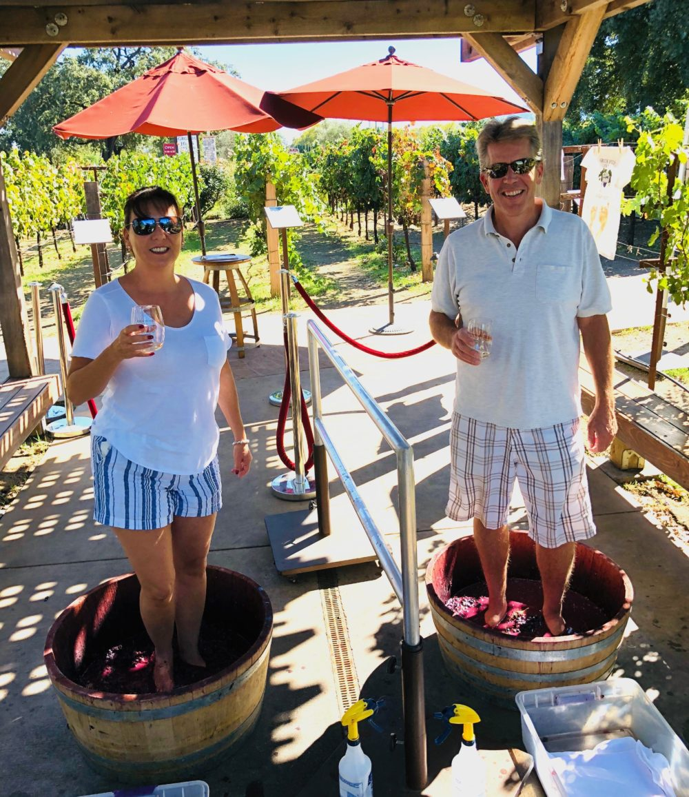 Stomping grapes at Grgich Hills Estate