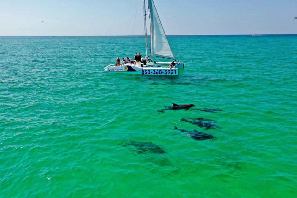 Florida Panhandle dolphins