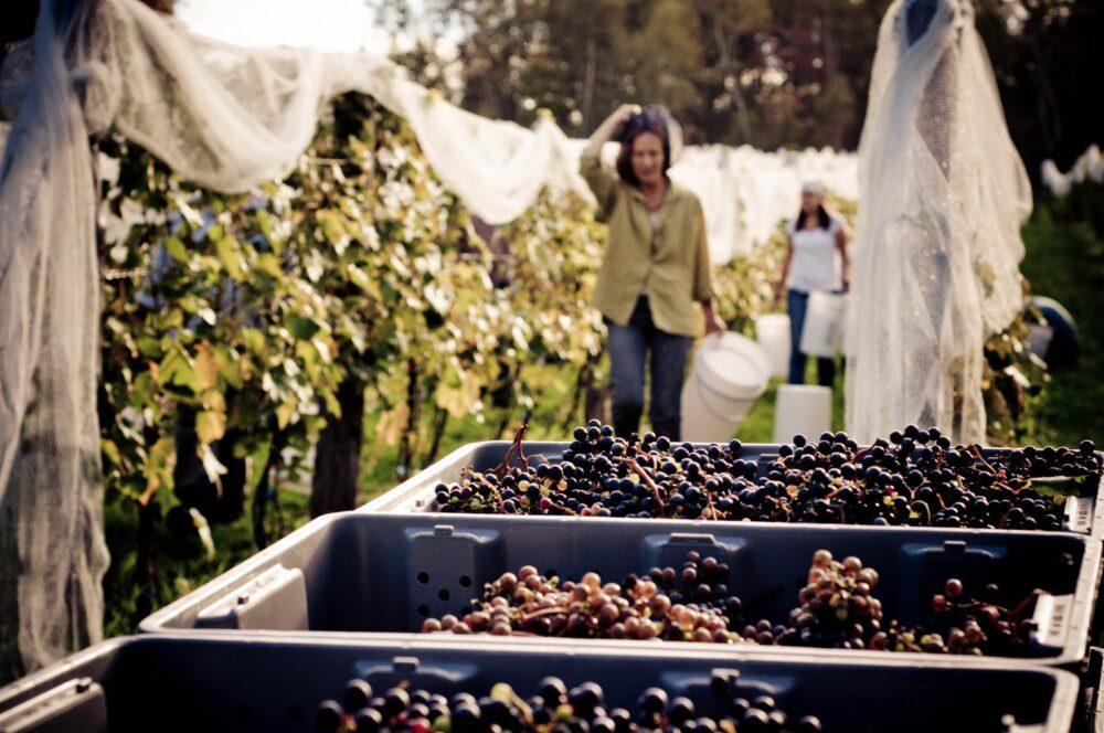 Domaine Bergeville Winery