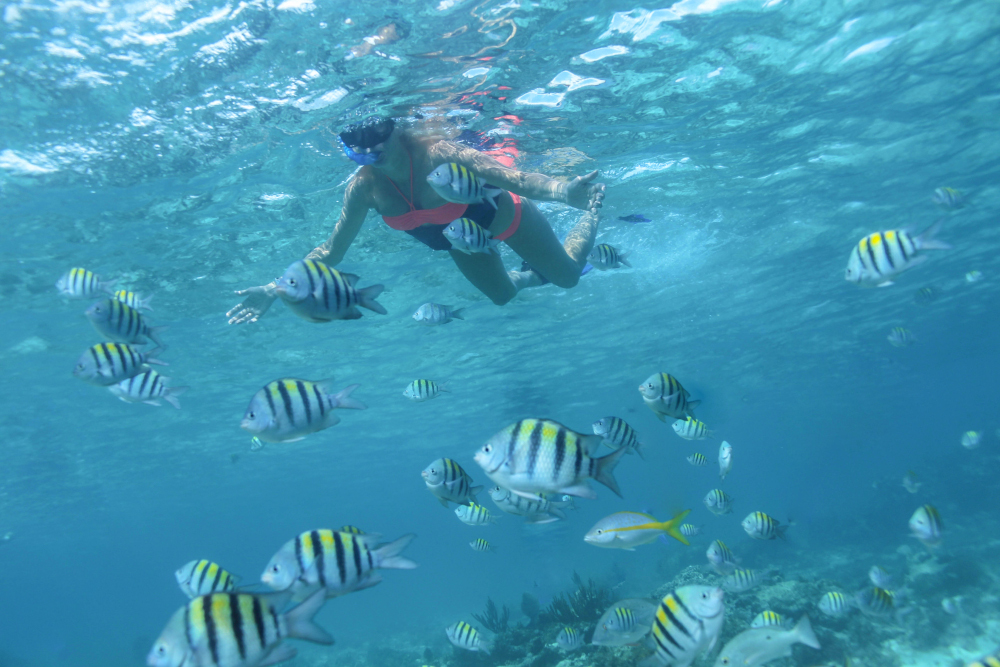 Snorkelling adventure in Puerto Vallarta